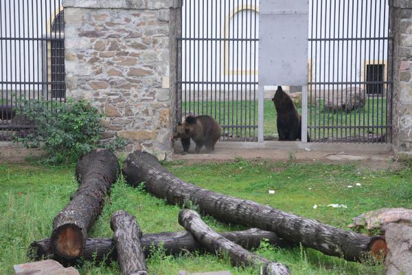 Paten für Torgauer Bären