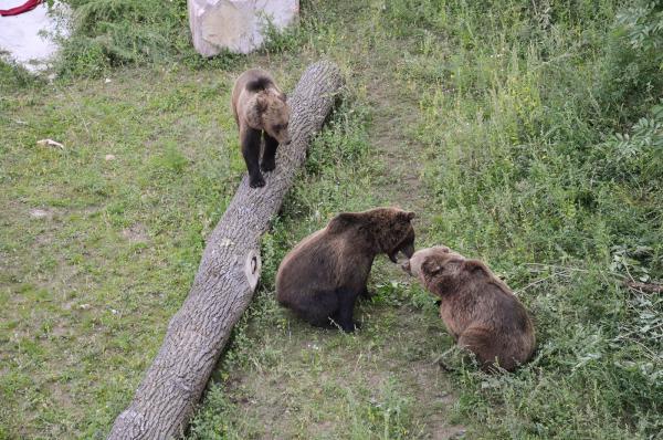 Alle drei Bären sind seit Samstag zusammen zu bestaunen
